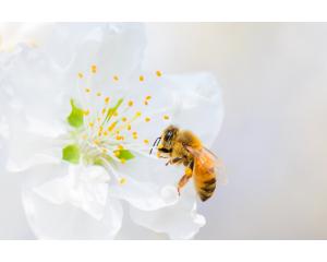 Méhméreg - a K-Beauty legfelkapottabb összetevője